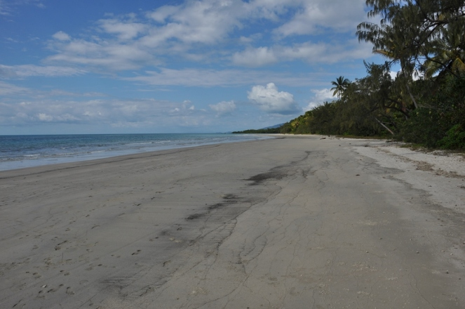 Look down the beach at Myall Beach, Cape Tribulation