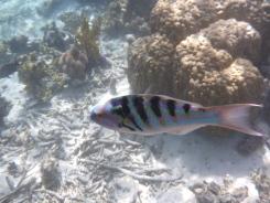 Nice coloured fish.
