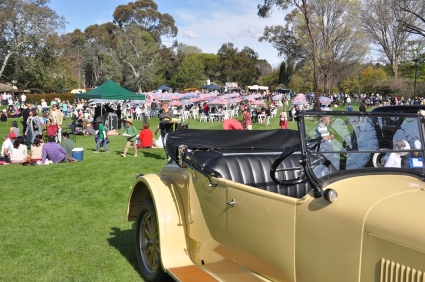 One of the vintage car on display with the picnic area in the background.