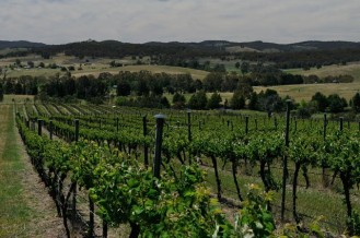 Part of the estate at Yarrh Wines