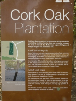 Sign detailing the story behind the Cork tree plantation.