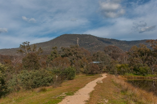 Mt. Tennent from the back of the Visitor centre